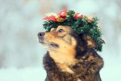 Hond die Kerstmiskroon dragen royalty-vrije stock afbeelding