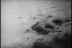 Hond die krab op strand achtervolgen stock footage