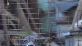 Hond die langzame motie ontschorsen stock videobeelden