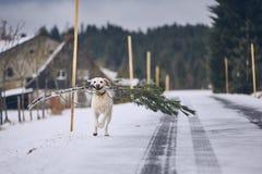 Hond die lopen met stock afbeelding