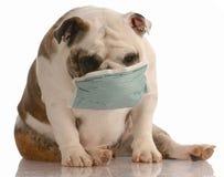 Hond die medisch masker draagt Stock Fotografie