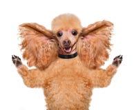 Hond die met afluisteraar luisteren Stock Fotografie