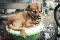 Hond die naar het koelen snakken Royalty-vrije Stock Afbeeldingen