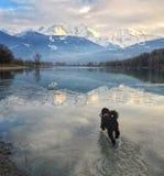 Hond die die naar Mont Blanc draven in Lak Passy wordt weerspiegeld Stock Afbeeldingen