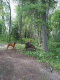 Hond die omhoog boom bekijken Royalty-vrije Stock Afbeeldingen
