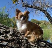 Hond die omhoog staart Royalty-vrije Stock Foto's