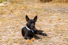 Hond die op de grond liggen Royalty-vrije Stock Fotografie