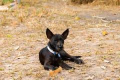 Hond die op de grond liggen Royalty-vrije Stock Foto