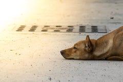 Hond die op de straat liggen en op de werkgever wachten Stock Fotografie