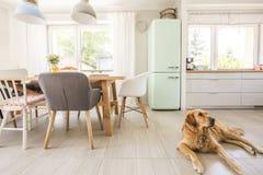 Hond die op de vloer in echte fotoeetkamer en keuken int. liggen stock afbeeldingen