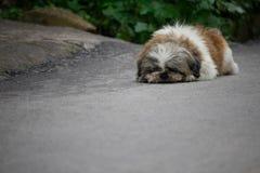 Hond die op de vloer ligt Royalty-vrije Stock Afbeelding
