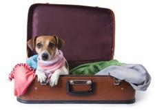 Hond die op een reis gaan royalty-vrije stock foto