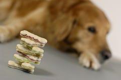 Hond, die op een stapel van koekjes let Stock Foto's