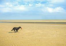 Hond die op een strand lopen stock afbeelding