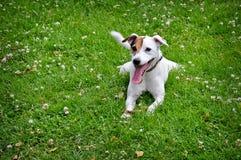 Hond die op het groene gras liggen Stock Afbeelding