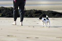 Hond die op het strand lopen Stock Foto
