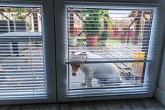 Hond die op open deur wachten stock afbeelding