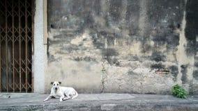 Hond die op sidestreet leggen royalty-vrije stock fotografie