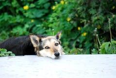Hond die op u letten stock foto's