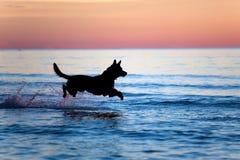 Hond die op water tegen zonsondergang loopt royalty-vrije stock fotografie