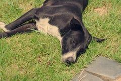 Hond die op werf liggen Stock Fotografie