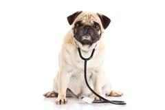 Hond die op witte arts wordt geïsoleerd als achtergrond Stock Fotografie