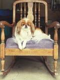Hond die oude school schommelen royalty-vrije stock foto's