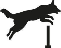 Hond die over hindernis springt Stock Foto
