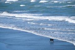 Hond die pret hebben bij het strand stock fotografie