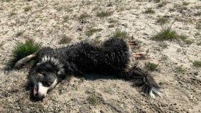 Hond die pret hebben bij strand in zand stock videobeelden