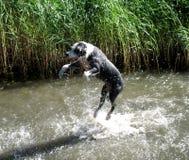 Hond die rond hangt Royalty-vrije Stock Afbeeldingen