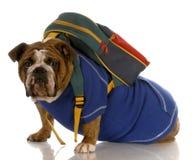 Hond die rugzak draagt Royalty-vrije Stock Afbeeldingen