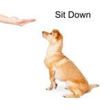 Hond die Sit Down Command opleiden Royalty-vrije Stock Afbeelding