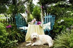 Hond die Tuin van Middagmaal genieten stock afbeeldingen