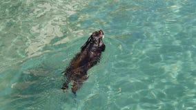 Hond die in turkoois water, bezinningen op waterspiegel zwemmen stock foto