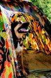 Hond die uit in Tent kampeert stock fotografie