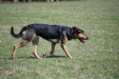 Hond die van een mooie de lenteochtend genieten stock fotografie