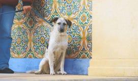 Hond die van puppy de zwart-witte metisse camera en gebonden verstand bekijken Royalty-vrije Stock Fotografie