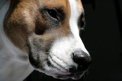 Hond die van zon genieten Stock Foto