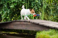 Hond die vissen met stuk speelgoed hengel vangen bij vijver royalty-vrije stock fotografie