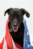 Hond die vlag draagt Royalty-vrije Stock Foto