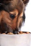 Hond die voedsel van een kom eet royalty-vrije stock afbeeldingen