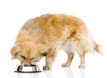 Hond die voedsel van schotel eten Op witte achtergrond Stock Afbeelding