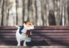 Hond die warme comfortabele sjaal dragen bij koude de winterdag op parkbank royalty-vrije stock afbeeldingen
