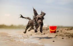 Hond die in water loopt Stock Afbeelding