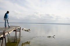 Hond die in water springt Stock Afbeeldingen