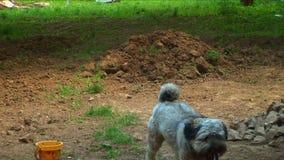 Hond die 02 in werking stellen stock footage