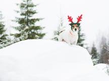 Hond die in wilde aard die bij Afwerking Lapland lopen vakantiekostuum dragen stock afbeelding