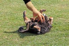 Hond die worden gekieteld Stock Afbeelding