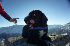 Hond die worden verbeterd stock foto's